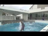 Дельфины ловят мяч на лету / Dolphins caught  the ball